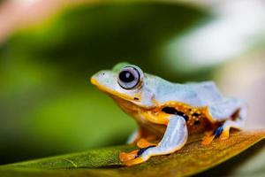 Saturated theme of jungle with exotic frog photo
