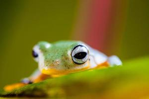 Fresh, beautiful concept of jungle with colorful frog photo