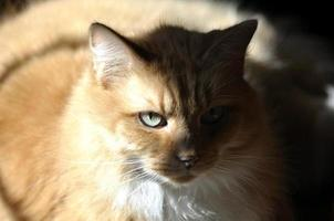 Orange Cat Laying in Sunlight with Interesting Shadowing photo