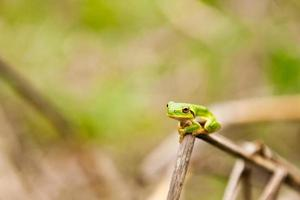 Frog on a branch