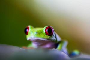 Saturated theme of tropical colorful frog photo
