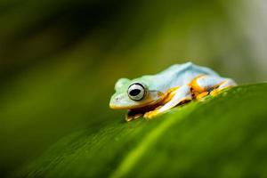 Colorful theme of exotic frog photo