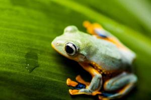Exotic theme with frog photo