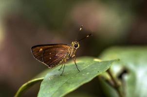 mariposa, tortuguero, costa rica