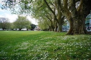 Victoria Park en Auckland. foto