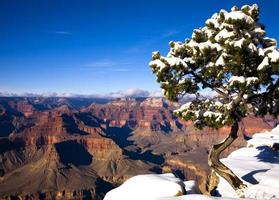 Canyon Pine photo