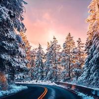Sunrise on snowy landscape photo