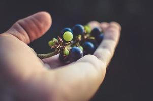 uvas en una mano