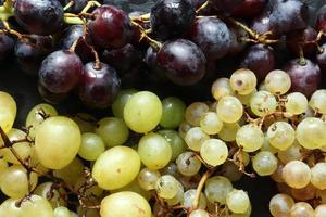 Photography of three varieties of grapes