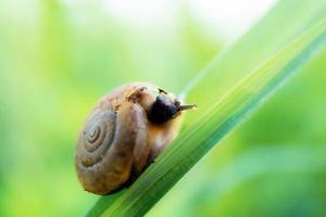 caracol en hoja de hierba