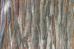Tree trunk bark texture close up