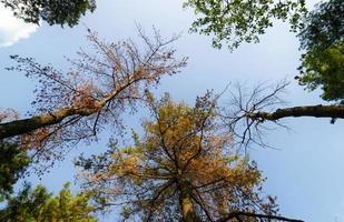 Forest trees in autumn season
