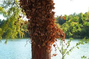 Hojas de plantas oxidadas colgando de un tronco de árbol