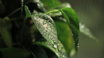 chuva na folha