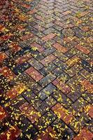 Autumn leaves on diagonal brick sidewalk after rain photo