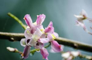 flor madre de cacao foto