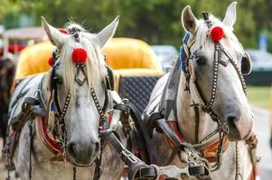 Horses in carriage