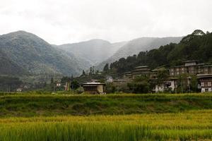 campos de arroz de Bután, valle de paro, septiembre de 2015