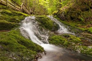 Small creek in the park photo