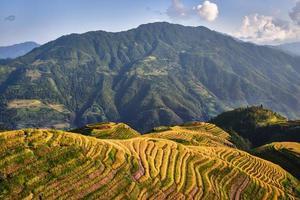 rice terraced fields Wengjia longji Longsheng Hunan China