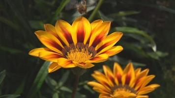 bijen bestuivende bloem deel twee