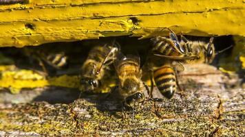 guardia, abejas, reunión, trabajo, abeja