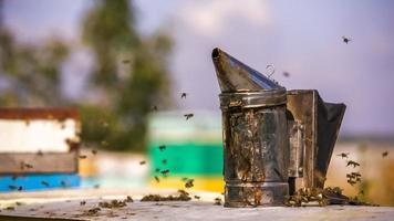 Bienenstock Rauchgerät und Bienen. Zeitlupe