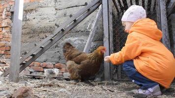 niña alimentando pollo y pollito 17978_07