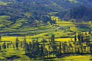 Camino rural y campo de colza con montaña.