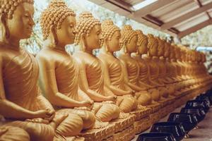 muchas estatuas de buda sentado en tailandia
