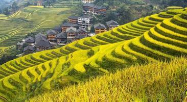 terrazas de arroz longsheng