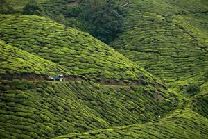 Tractor in Tea Valley and Cameron Highlands photo