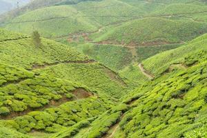 plantaciones de té munnar india foto