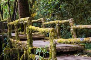 Ang Ka Nature Trail at Doi Inthanon National Park