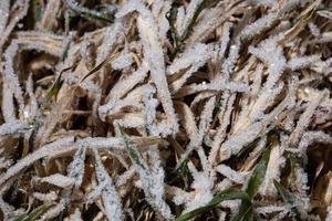 hielo en la hierba