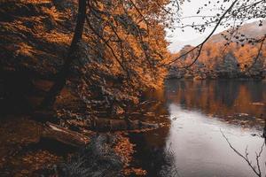 Orange-leafed trees near lake