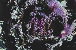 Dark vegetable background photo