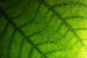fondo de naturaleza verde