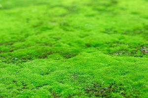 Closeup of beautiful bright green moss in garden with stones