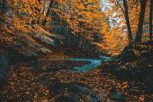 Forest stream surrounded with orange trees win autumn
