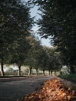 hojas caídas en un camino