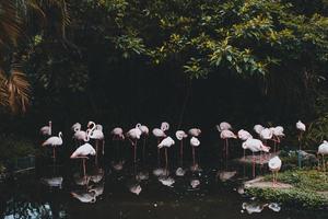 grupo de flamencos en un estanque