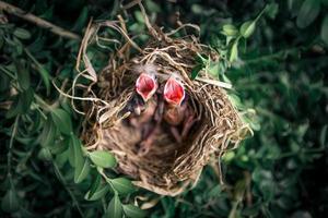 vista superior de pajaritos en el nido