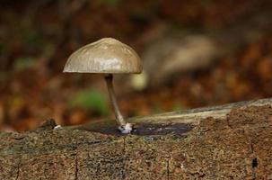 Mushroom growing on a tree trunk