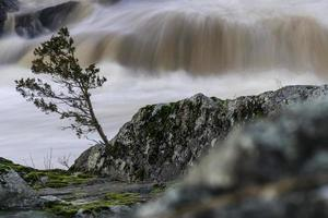 Waterfall behind tree and rocky shore photo