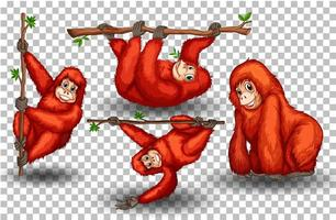 Set of orangutan on transparent background