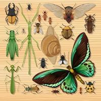 Set of different insects on wooden wallpaper