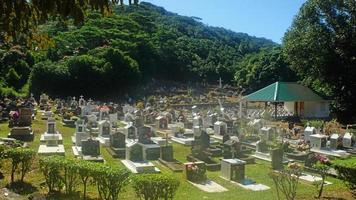 tropical graveyard photo