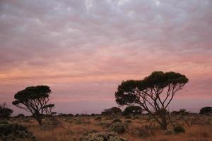 Evening time on the Nullarbor