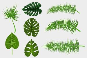 Tropical background palm leaves set vector